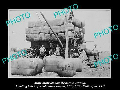 OLD LARGE HISTORIC PHOTO OF MILLY MILLY STATION WA, LOADING WOOL IN WAGONS c1918