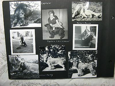 1950 Photo Album PAGE~16 Snapshots of Cocker Spaniels, Dogs, Cat~Cute to Frame!