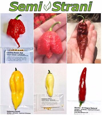 60 SEEDS of the 6 WORLDS HOTTEST AND TASTY CHILI PEPPER Coll. 6 BIS: Reaper, etc