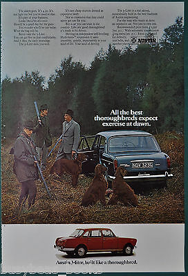 1970 AUSTIN 3-Litre advertisement, UK advert, British Leyland, hunting