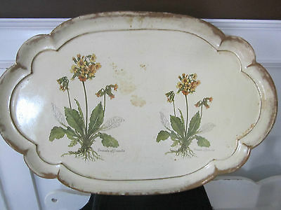 Beautiful shabby cream scallop tray. Large, Florentine/Italy.