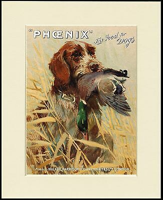 Italian Spinone Lovely Dog Food Advert Print Mounted Ready To Frame