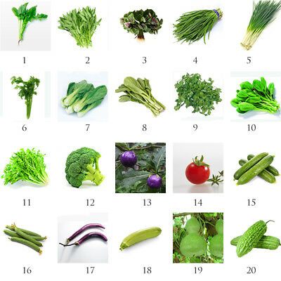 NEW Heirloom Home Garden Vegetable Seeds Non-GMO Seeds Organic Plant