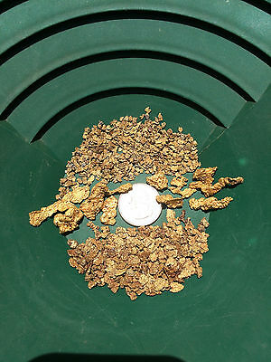 Premium LOADED Gold paydirt concentrates - Two Pounds!   FREE SHIPPING
