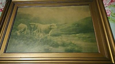 Old Victorian Print Cattle