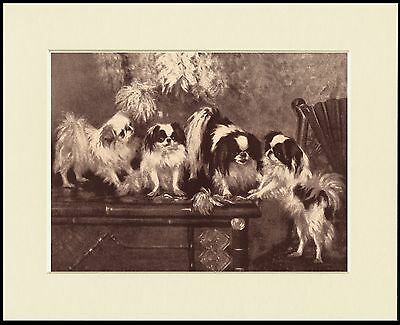 Japanese Chin Three Dogs Charming Sepia Dog Print Mounted Ready To Frame