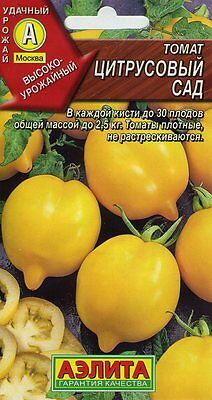 "Tomato ""Citrus Garden"" Russian High Quality seeds"