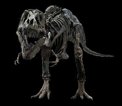 Tyrannosaurus rex (squelette) moulage cast dinosaure fossil fossile fossilien