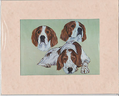 """MOUNTED  8"""" X 10"""" OIL PAINTING PRINT of  WELSH SPRINGER SPANIEL STUDY   DOG"""