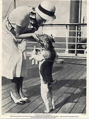 Wire Fox Terrier Lady And Dog Aboard Ship Old Dog Print From 1934