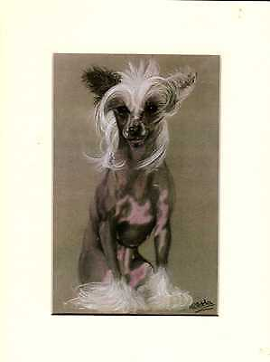 """8"""" x  6"""" MOUNTED OIL PAINTING  PRINT of a CHINESE CRESTED DOG"""