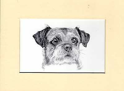 """MOUNTED   8"""" x  6""""  PENCIL DRAWING PRINT of A  BORDER TERRIER HEAD STUDY"""
