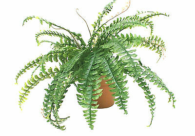 Artificial Boston Fern Plant ~ House Plant  ~ 100% Botanically Accurate
