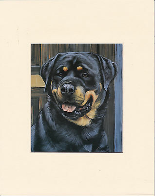 """8"""" X 10"""" MOUNTED OIL PAINTING PRINT of   ROTTWEILER HEAD STUDY   DOG"""