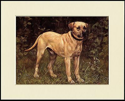Mastiff Old Type Dog Standing Great Dog Print Mounted Ready To Frame