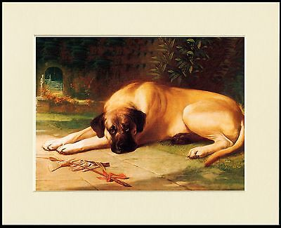 Mastiff Old Type Dog At Rest Great Dog Print Mounted Ready To Frame