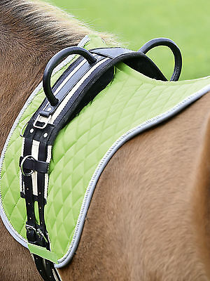 Busse Lunging belt Double Handles Floor work Riding ohne Saddle Vaulting