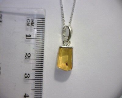 """Baltic Amber Sterling Silver Pendant W Fossil Fly Insect Inclusion 18"""" Chain #4"""
