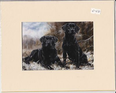 """8"""" X 10"""" MOUNTED  OIL PAINTING PRINT of TWO BLACK LABRADORS  DOG"""