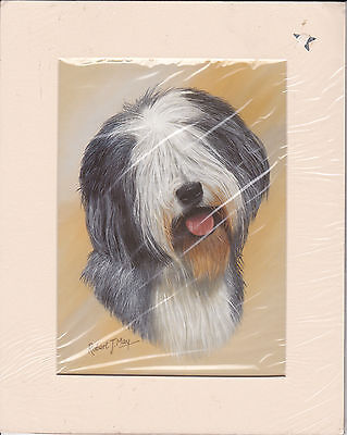"""MOUNTED  8"""" X 10"""" OIL PAINTING PRINT of  A  BEARDED COLLIE HEAD STUDY"""