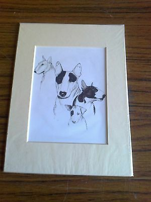 """MOUNTED   8"""" x  6""""  PASTEL DRAWING PRINT of the ENGLISH BULL TERRIER  DOG"""