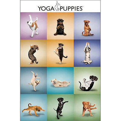 Yoga Puppies POSTER 61x91cm NEW *Art Creative Photographic Dogs Cute