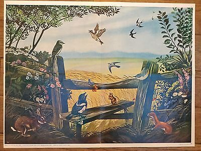 Vintage school poster educational. 1964. Summertime. 1960s Nature. Countryside.