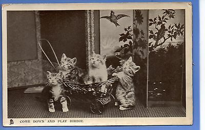 Super 1906 Cat Kittens Birdie Come And Play Happy Catland Tuck Rp Photo Postcard