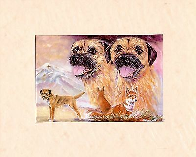 """MOUNTED  8 """" x  10 """" MOUNTED PRINT of A   BORDER TERRIER STUDY   DOG"""