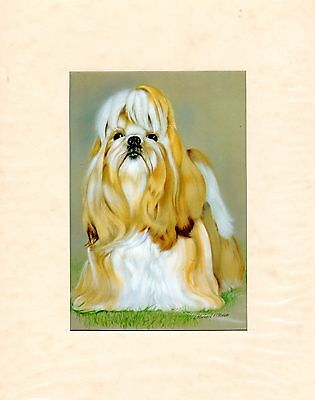 """MOUNTED  8"""" X 10"""" OIL PAINTING PRINT of A  LHASA APSO STUDY  DOG"""