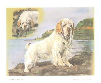 """17"""" X 19"""" SIGNED LIMITED EDITION PASTEL DRAWING PRINT of CLUMBER SPANIEL  DOG"""