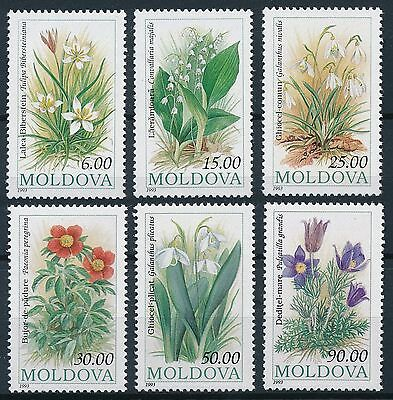 [ST57015] Moldova 1993 Flora Good set of stamps very fine MNH