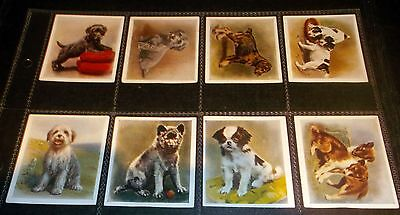 10 Godfrey Phillips Cigarette Cards Our Puppies