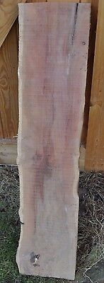 Plank of Waney edge English Yew