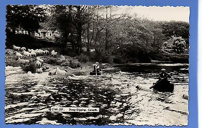 SUPERB 1957c SHEEP DIPPING IN RIVER AT CENARTH RP REAL PHOTO VINTAGE POSTCARD