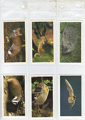 Player's Grandee - Britain's Nocturnal Wildlife - Large Cards - 1987