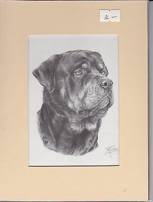 """MOUNTED 8"""" x  6"""" PENCIL DRAWING PRINT of A ROTTWEILER  HEAD DOG"""
