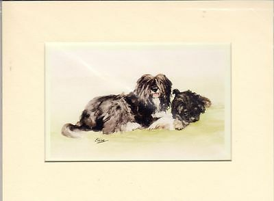 """8"""" X 6"""" MOUNTED  LITHOGRAPH PRINT of  A TWO TIBETAN TERRIERS  STUDY"""