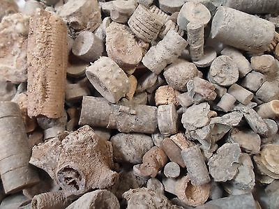 1 LB Lot Crinoids Echinoderm LARGE VARIETY Excavated Geological Acient Specimine