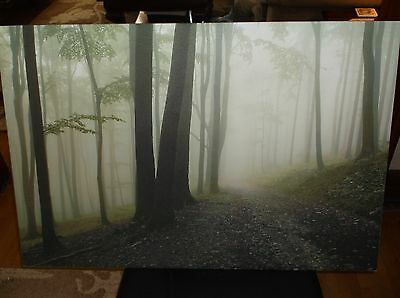"Large 24 X 36"" Print On Stretched Canvas Fog Trees In The Woods"