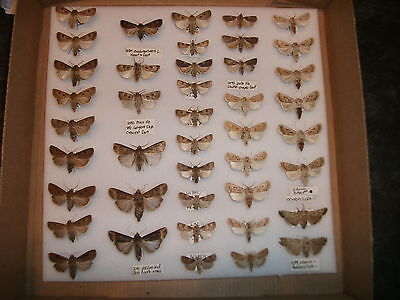 Box of old British moths. Insects. Entomology. Lepidoptera