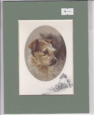 """8"""" X 6"""" MOUNTED  LITHOGRAPH PRINT of A JACK RUSSELL STUDY"""