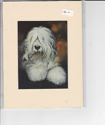 """8"""" X 6"""" MOUNTED  LITHOGRAPH PRINT of A OLD ENGLISH SHEEPDOG HEAD STUDY"""