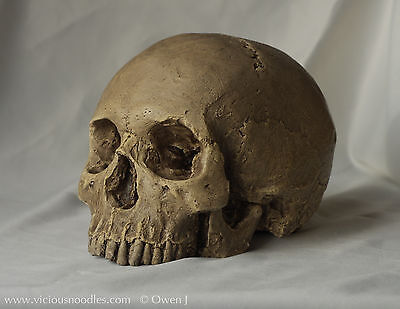 HUMAN SKULL REPLICA, full size realistic, hand made from plaster of Paris
