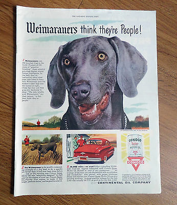 1950 Conoco Continental Oil Company Ad  Weimaraners Dog Think They're People