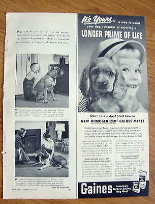 1953 Gaines Dog Meal Ad  Cocker Spaniel Dog Longer Prime of Life