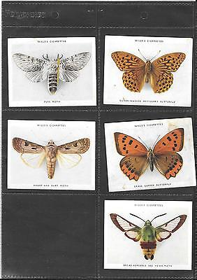 Will's - Butterflies & Moths - 5 Large Cards - 1938