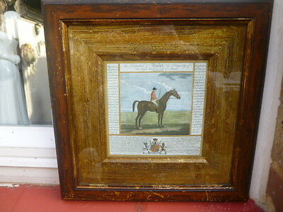 "Frame & Glazed * Racehorse Picture  * "" Bajazet "" With The Write Up"