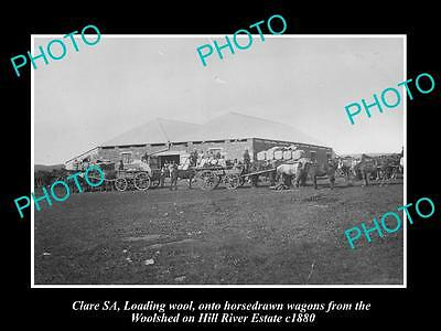 OLD LARGE HISTORIC PHOTO OF CLARE SA, HILL RIVER WOOL SHED & LOADED WAGONS c1880
