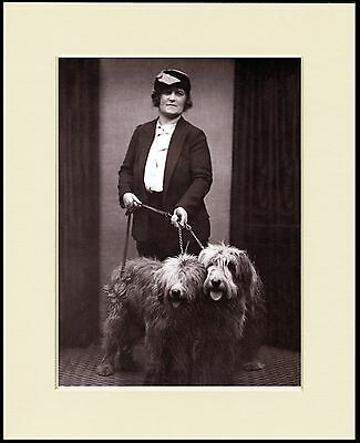 Old English Sheepdog Lady Anddogs Lovely Dog Photo Print Mounted Ready To Frame